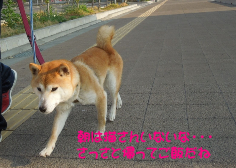 f:id:miyuki1967:20140425112502j:image:w450