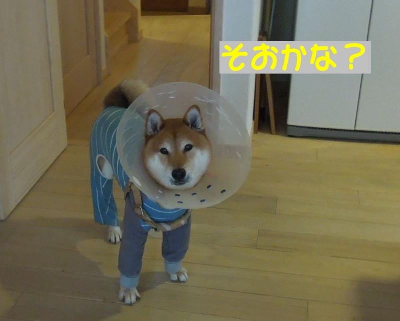 f:id:miyuki1967:20140425113553j:image:w450