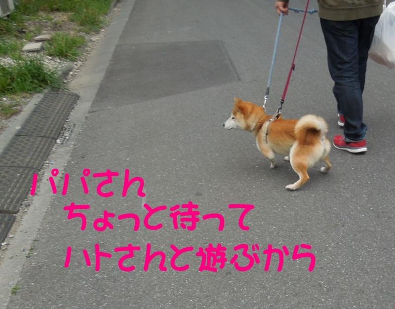 f:id:miyuki1967:20140507112540j:image:w450