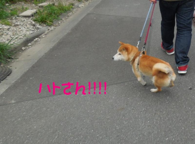 f:id:miyuki1967:20140507112556j:image:w450