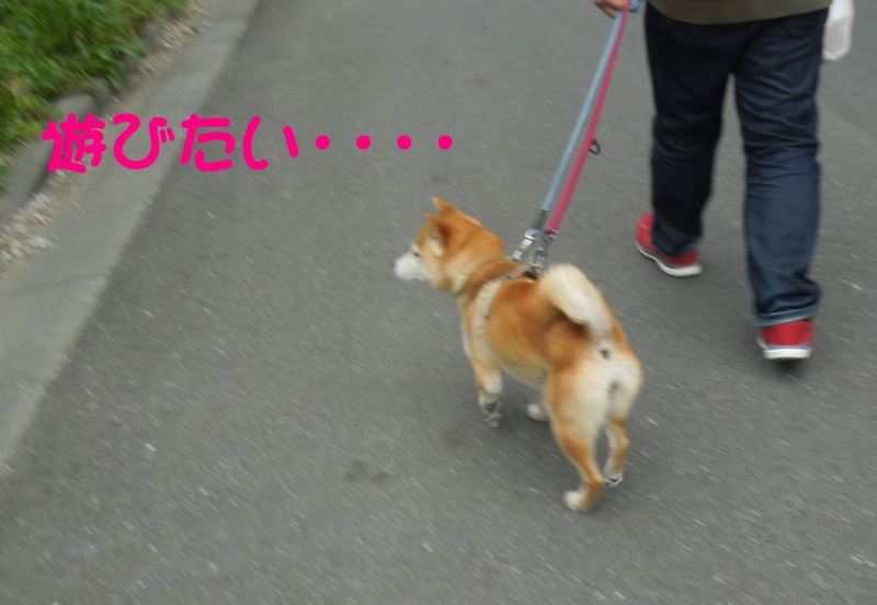 f:id:miyuki1967:20140507112644j:image:w450