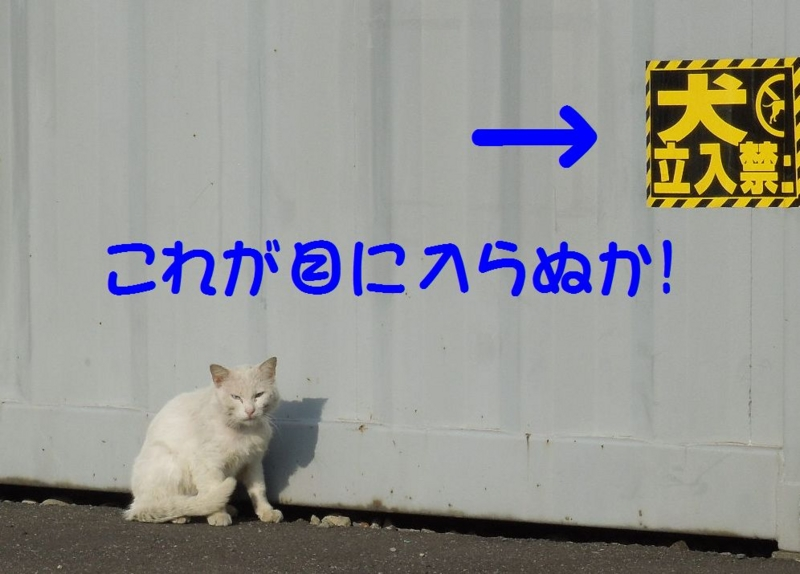 f:id:miyuki1967:20140508121640j:image:w450