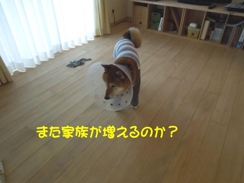 f:id:miyuki1967:20140509111244j:image:w450