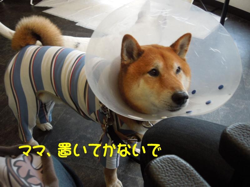 f:id:miyuki1967:20140509142634j:image:w450