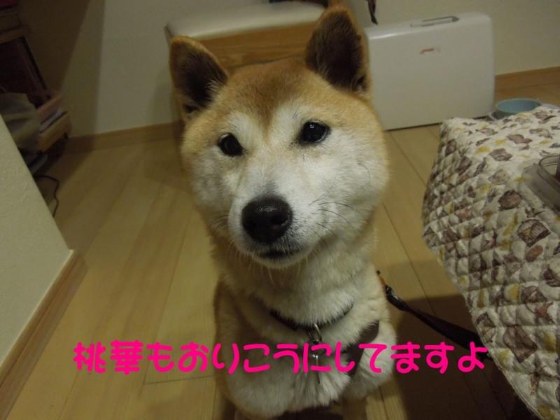 f:id:miyuki1967:20140509144413j:image:w450