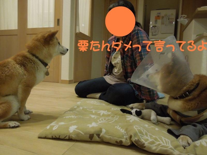 f:id:miyuki1967:20140513110349j:image:w450