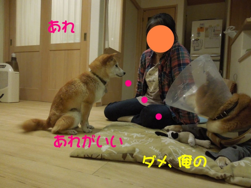 f:id:miyuki1967:20140513110515j:image:w450