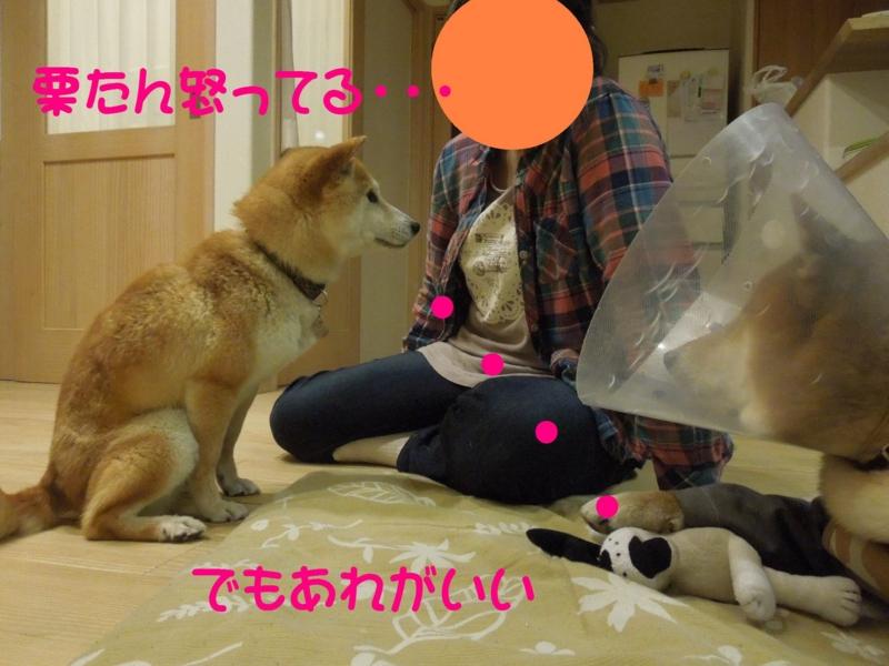 f:id:miyuki1967:20140513110618j:image:w450