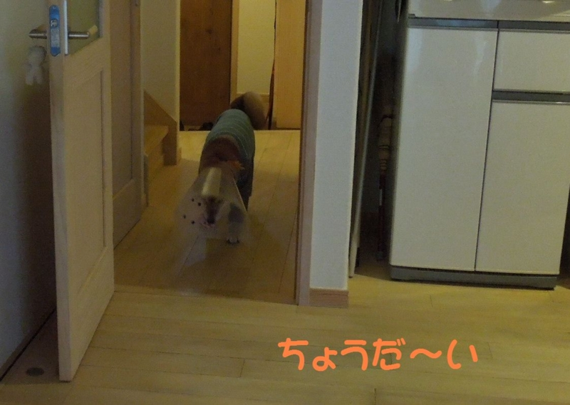 f:id:miyuki1967:20140513114854j:image:w450