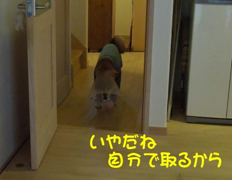 f:id:miyuki1967:20140513115025j:image:w450