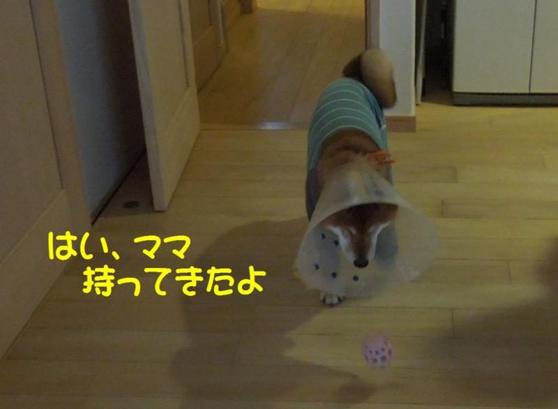 f:id:miyuki1967:20140513115111j:image:w450