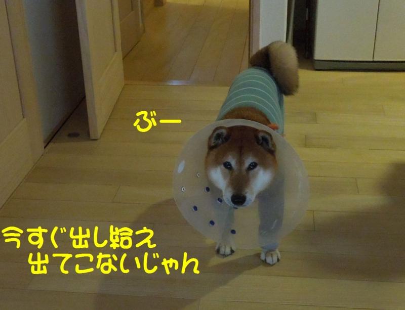 f:id:miyuki1967:20140513115143j:image:w450