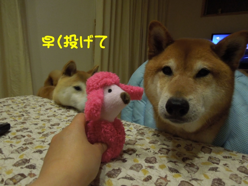 f:id:miyuki1967:20140521105933j:image:w450