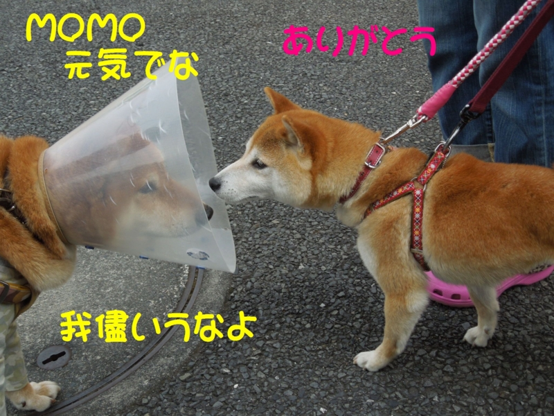 f:id:miyuki1967:20140526102614j:image:w450