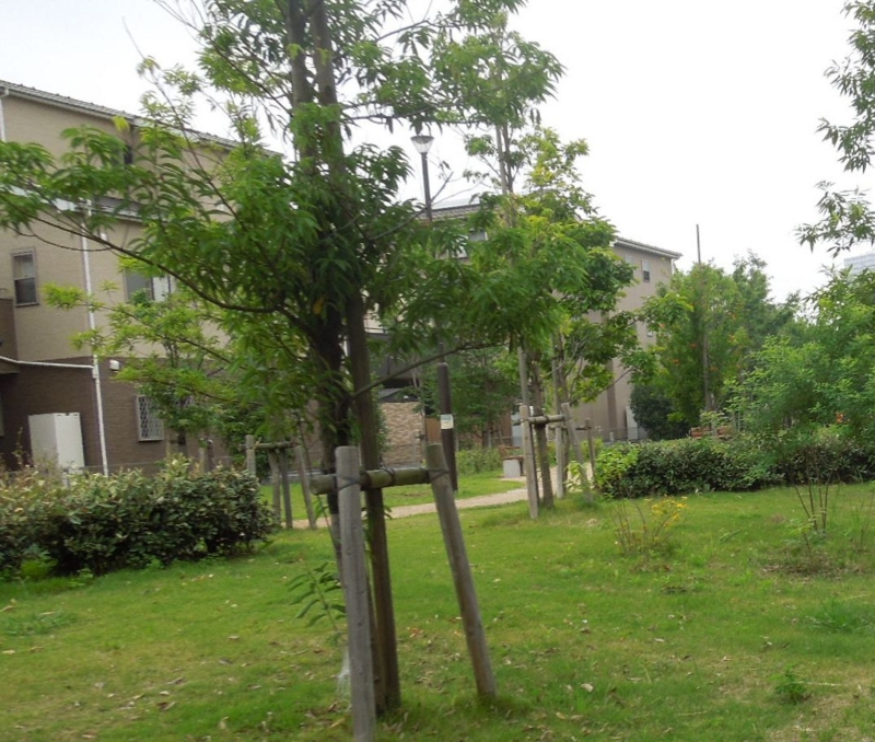 f:id:miyuki1967:20140618111845j:image:w450
