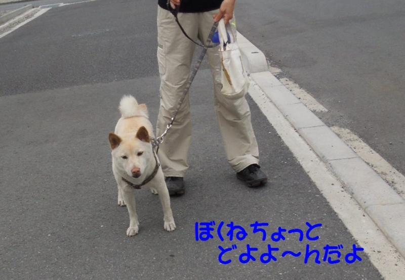 f:id:miyuki1967:20140618112221j:image:w450
