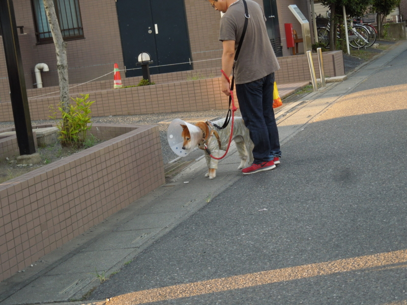 f:id:miyuki1967:20140804110039j:image:w450
