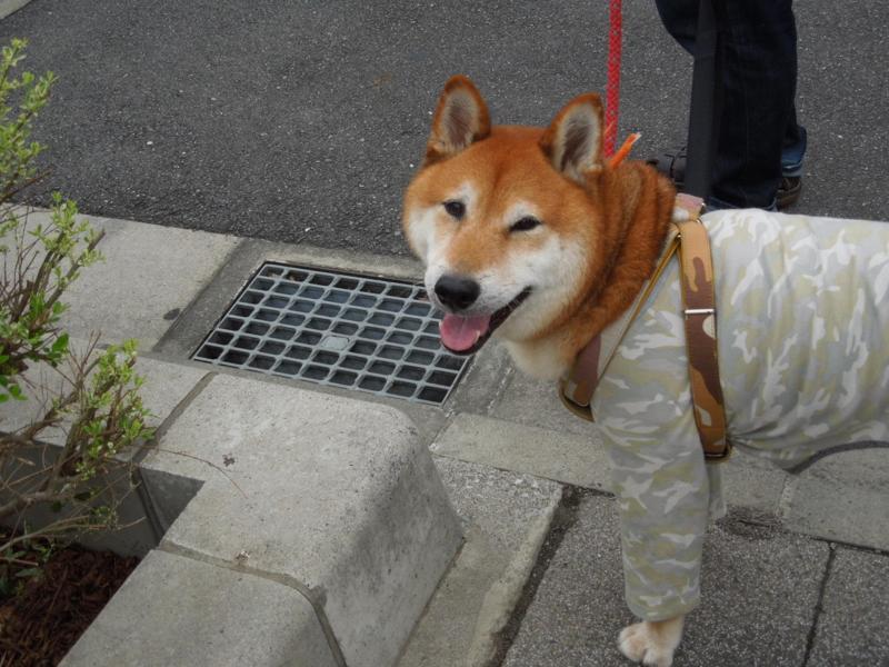 f:id:miyuki1967:20140818104912j:image:w450