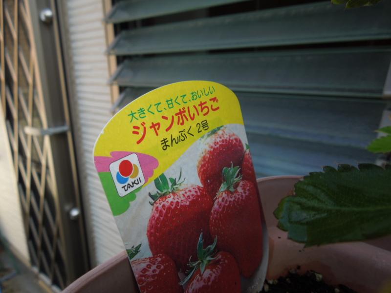 f:id:miyuki1967:20140820101302j:image:w450