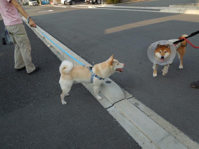 f:id:miyuki1967:20140822160758j:image:w450