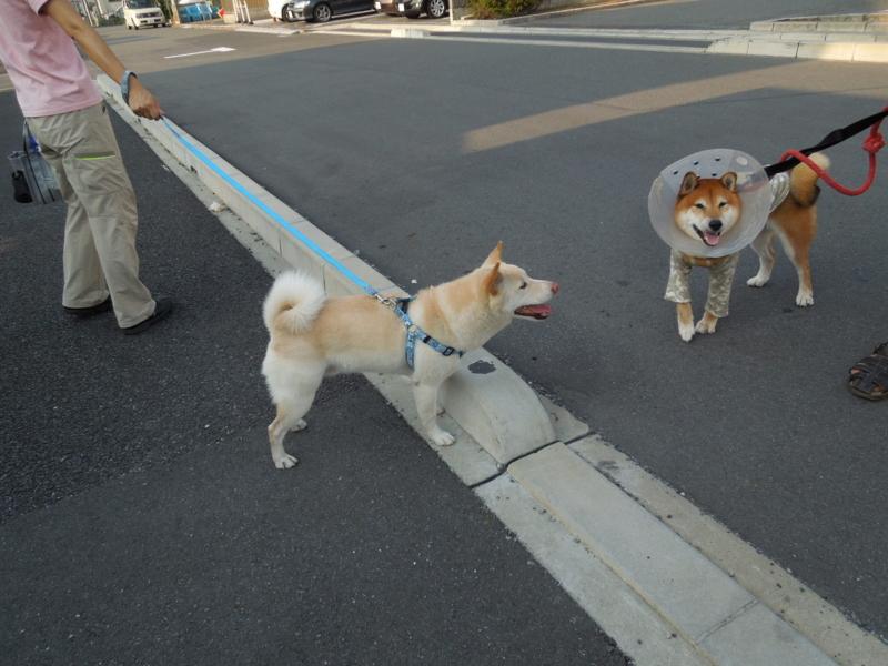 f:id:miyuki1967:20140822160845j:image:w450