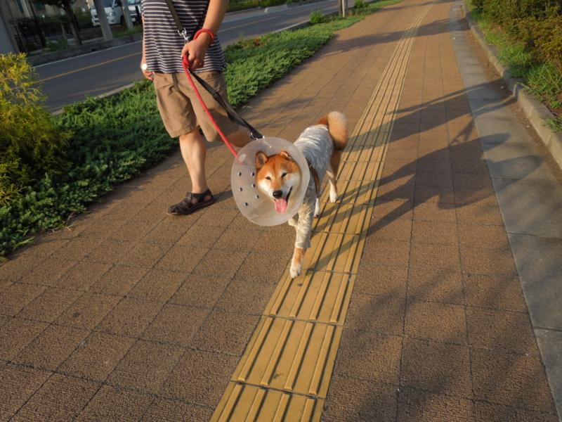 f:id:miyuki1967:20140822161055j:image:w450