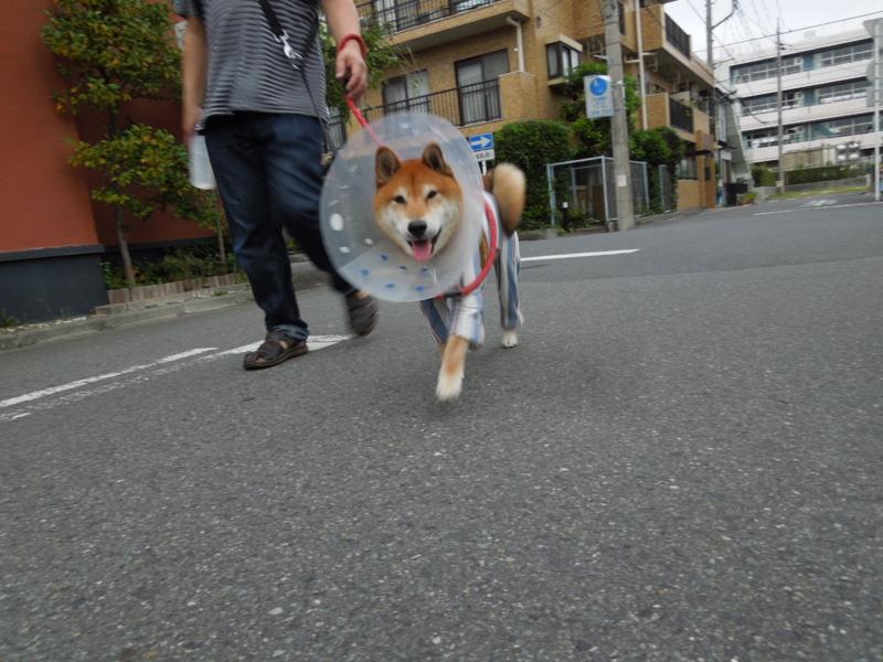 f:id:miyuki1967:20141001110358j:image:w450