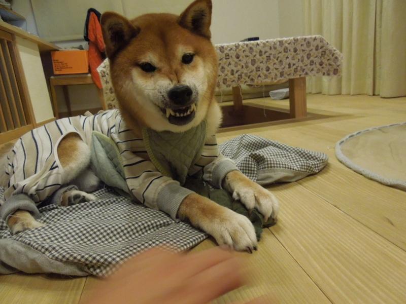f:id:miyuki1967:20141016160823j:image:w450