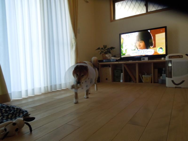 f:id:miyuki1967:20141121111827j:image:w450