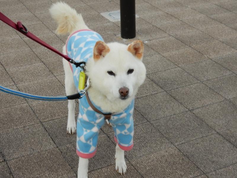 f:id:miyuki1967:20141219105759j:image:w450
