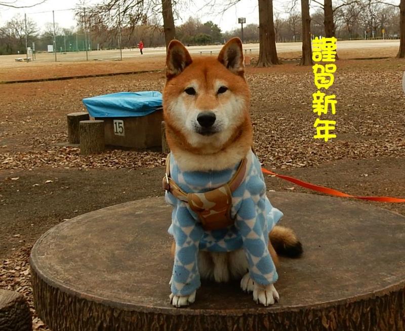 f:id:miyuki1967:20150101231122j:image:w450