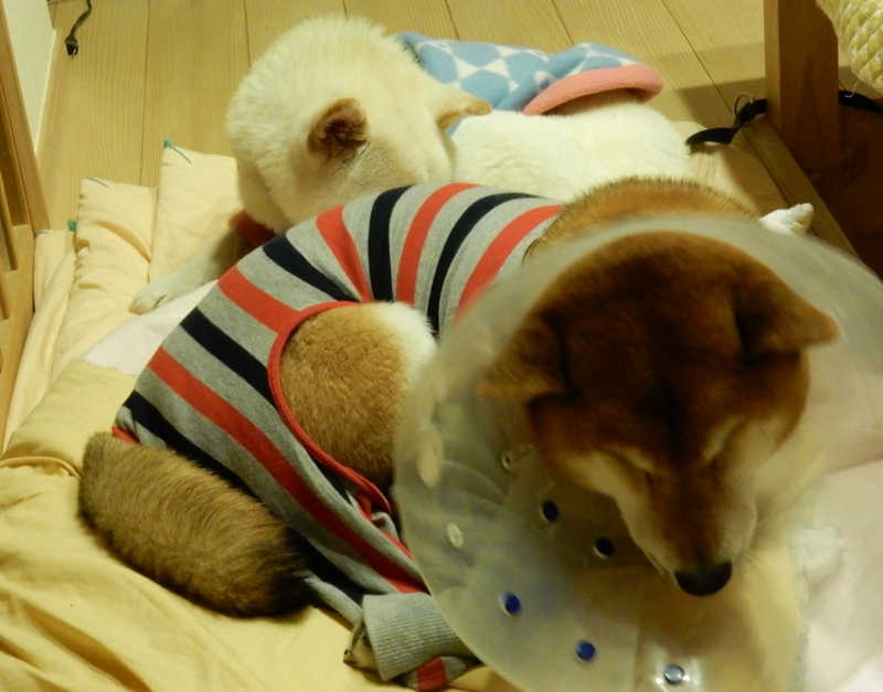 f:id:miyuki1967:20150106111218j:image:w450
