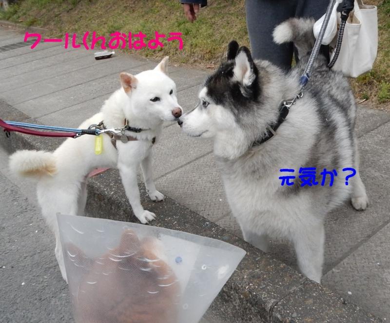 f:id:miyuki1967:20150403111054j:image:w450