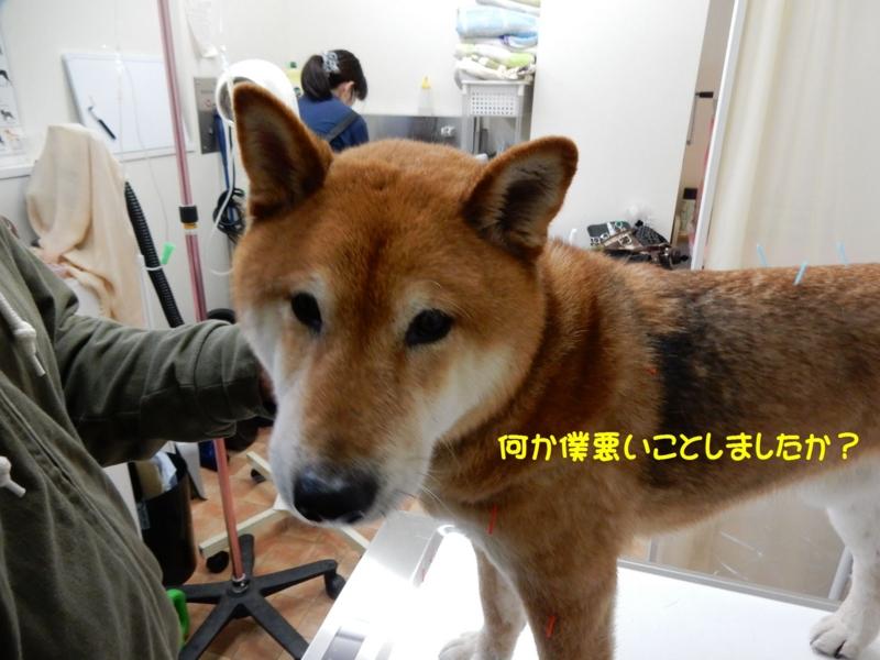 f:id:miyuki1967:20150406111111j:image:w450