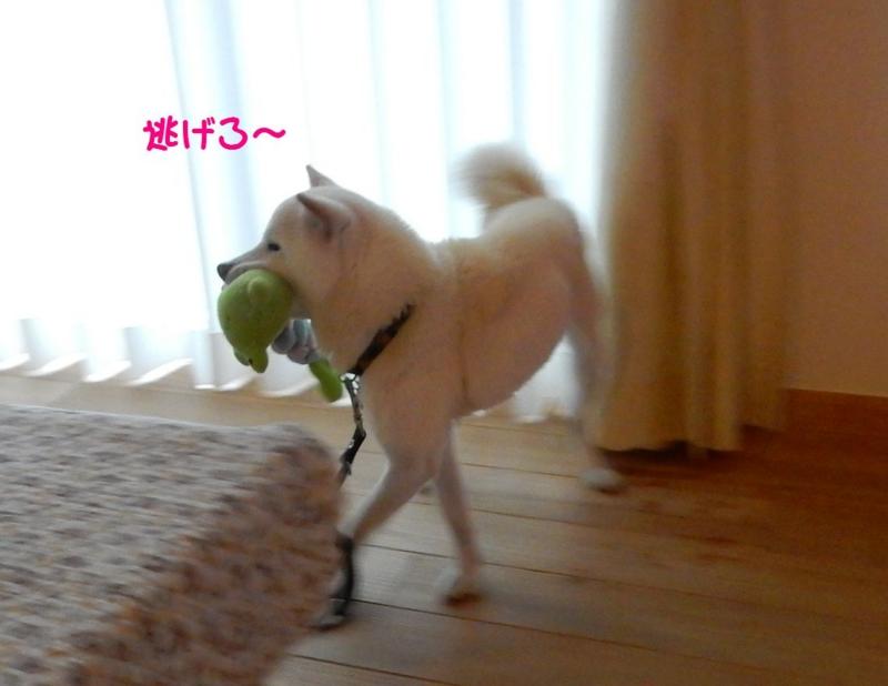 f:id:miyuki1967:20150415110714j:image