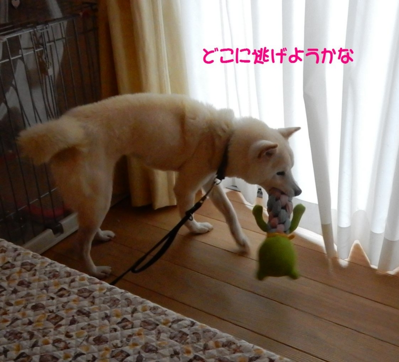 f:id:miyuki1967:20150415110715j:image