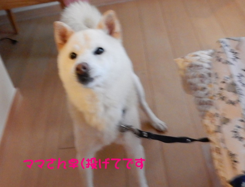 f:id:miyuki1967:20150415110717j:image