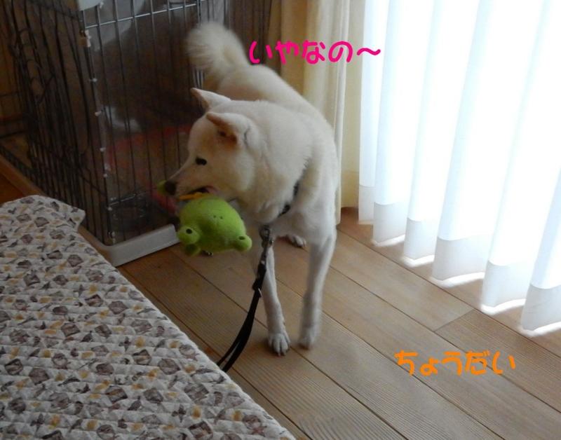 f:id:miyuki1967:20150415110726j:image