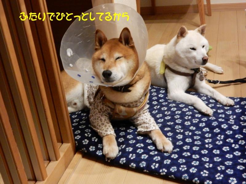 f:id:miyuki1967:20150626114349j:image:w450