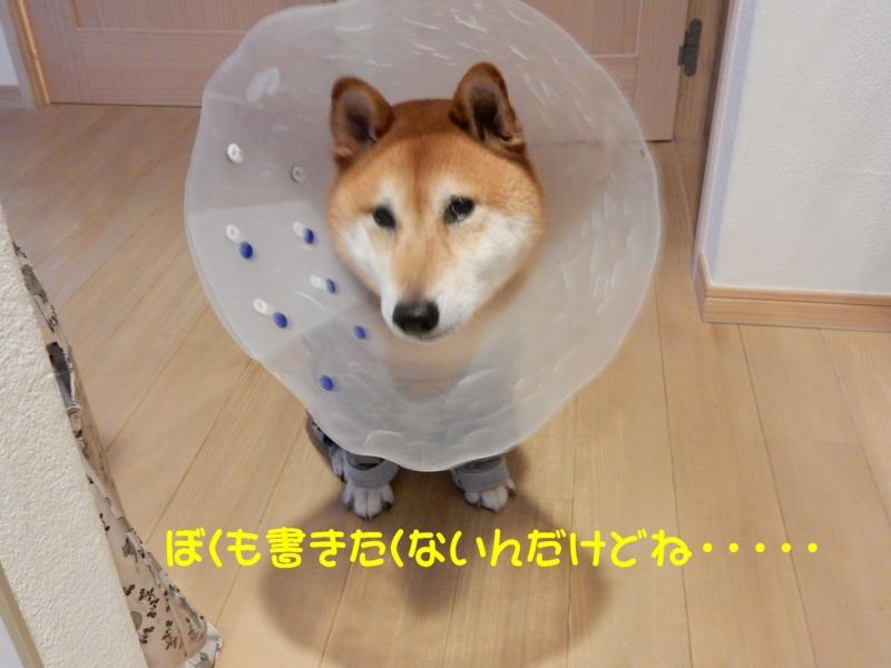 f:id:miyuki1967:20150831103606j:image:w450