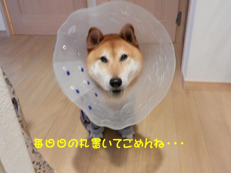 f:id:miyuki1967:20150831103610j:image:w450