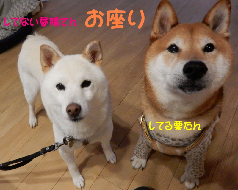 f:id:miyuki1967:20150902111005j:image:w450