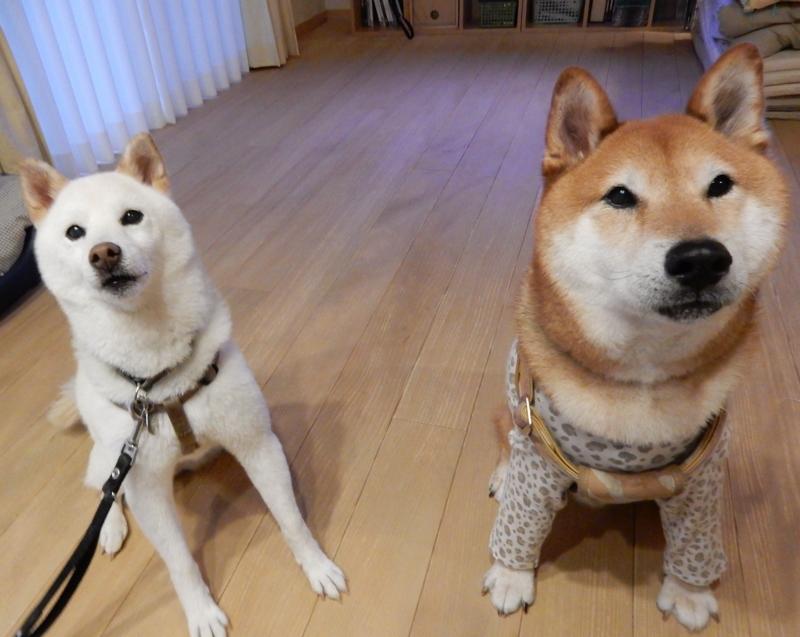 f:id:miyuki1967:20150902111106j:image:w450
