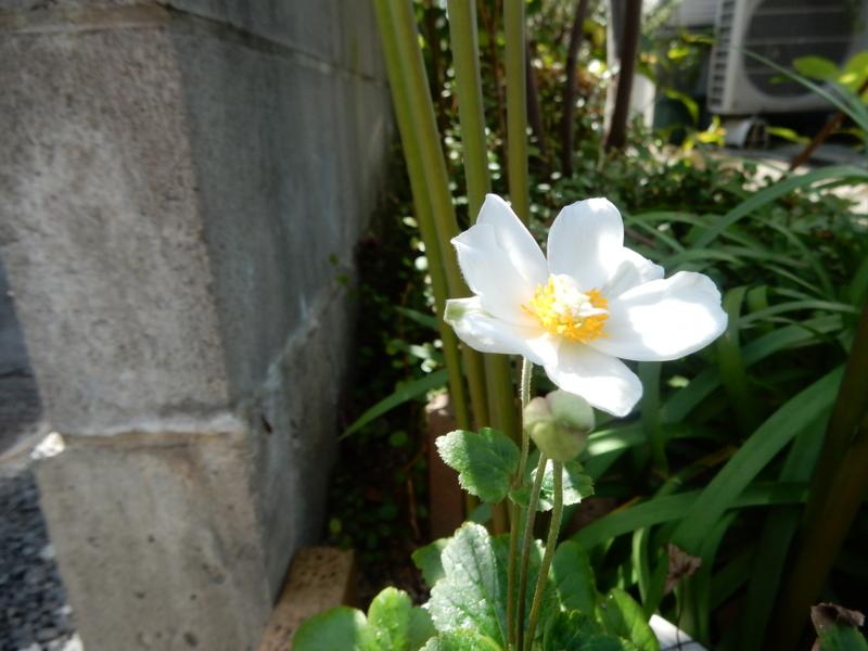 f:id:miyuki1967:20150925105718j:image:w450