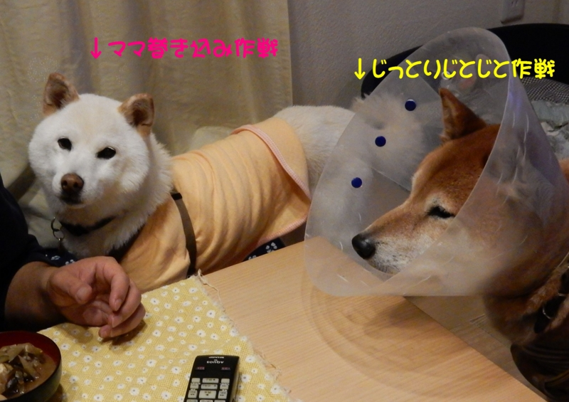 f:id:miyuki1967:20151113103446j:image:w450
