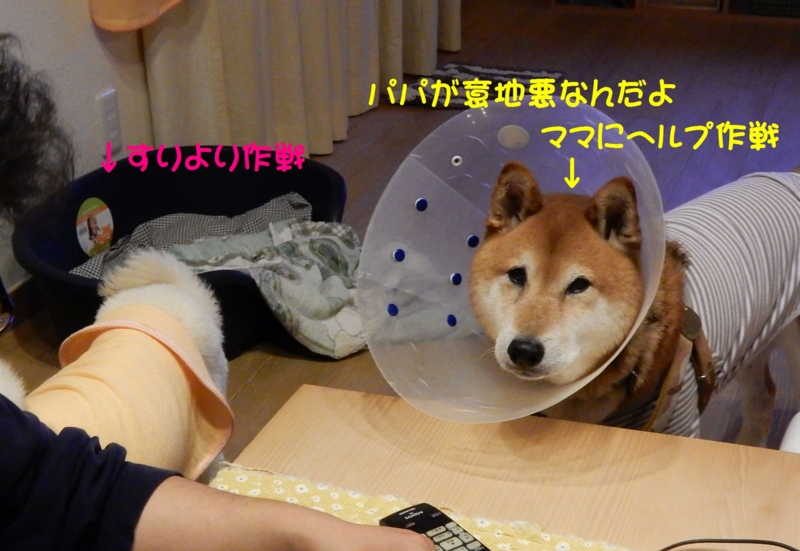 f:id:miyuki1967:20151113104309j:image:w450