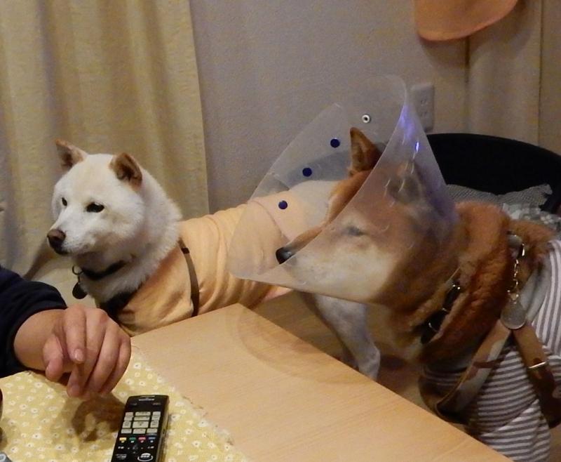 f:id:miyuki1967:20151113104535j:image:w450