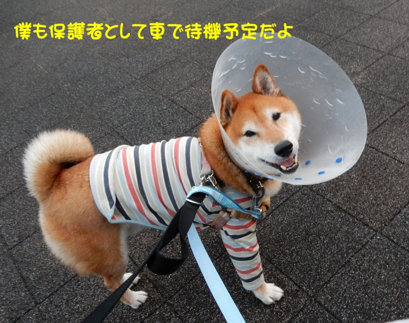 f:id:miyuki1967:20151127105448j:image:w450