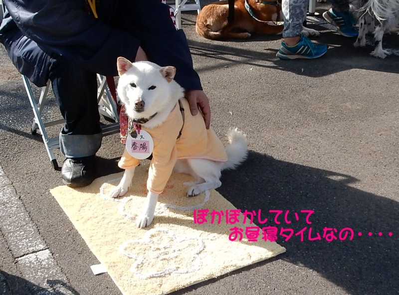 f:id:miyuki1967:20151130092003j:image:w450