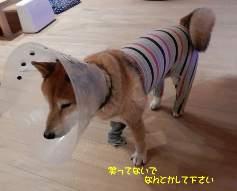 f:id:miyuki1967:20151201111850j:image:w450
